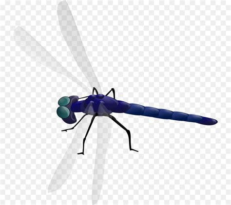 Animated Dragonfly Wallpaper - animated dragonfly wallpaper picserio