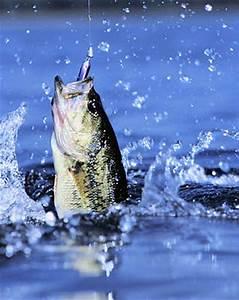 Mexico Bass Fishing  U2013 The Ultimate Fishing Trip