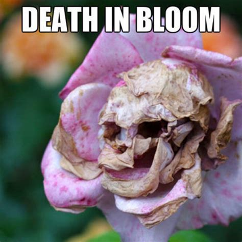 Flower Memes - flower memes blossoming gifts blog