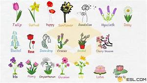 Flowers Names: Useful List Of Flowers With Images - 7 E S L