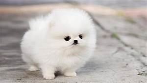 The Cutest Puppy in The World - YouTube  Cutest