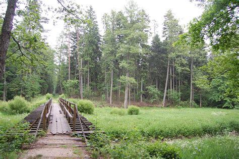 lasy janowskie wikipedia wolna encyklopedia