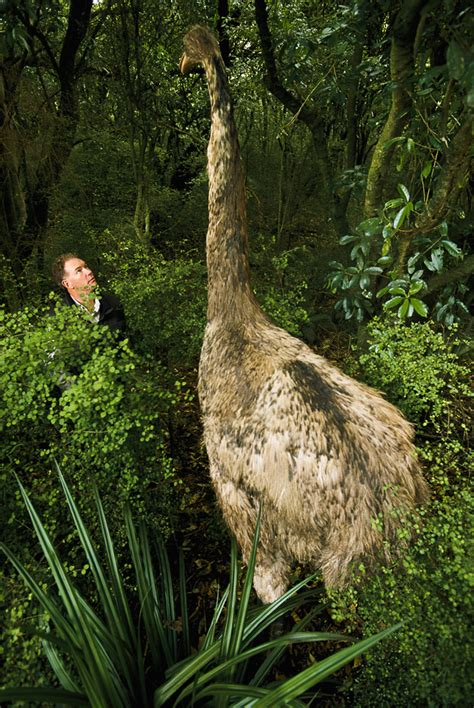 birds   fat  fly  dinosaurs vanished