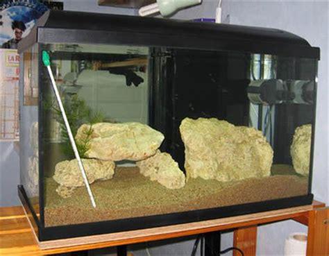 un aquarium de 800 litres eau douce afrique lac malawi aquarium webzine l aquariophilie d