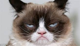 grumpy cat pictures grumpy cat lives up to name at own book launch