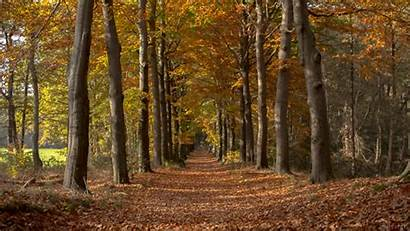 Fall Autumn Giphy Forest Pathway Nature Living