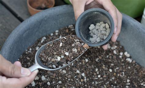 ดิน ปลูกแคคตัส สูตร เป้ หนามแดง - ต้นไม้และสวนออนไลน์