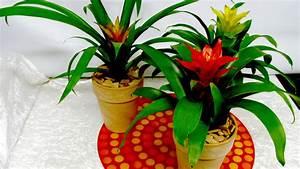 Plantes à Suspendre : top 3 des plantes d 39 hiver le paysagiste ~ Premium-room.com Idées de Décoration