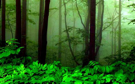Background Greenery Wallpaper by Greenery Wallpapers Photos And Desktop Backgrounds For