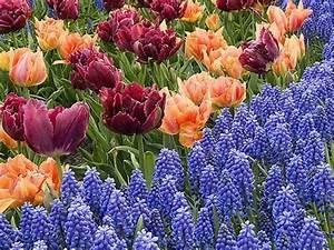 Planter Des Bulbes : planter des bulbes de printemps en automne youtube ~ Dallasstarsshop.com Idées de Décoration
