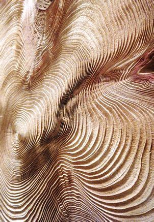 Wood Tree Rings Texture
