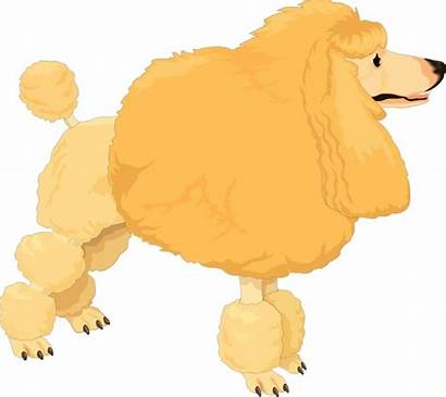 Poodle Clipart Dog Vector Yellow Clip Fluffy