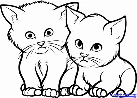 newborn kittens coloring pages coloring home