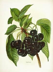 Wright Fruit Growers Guide  Full Volume At Panteek