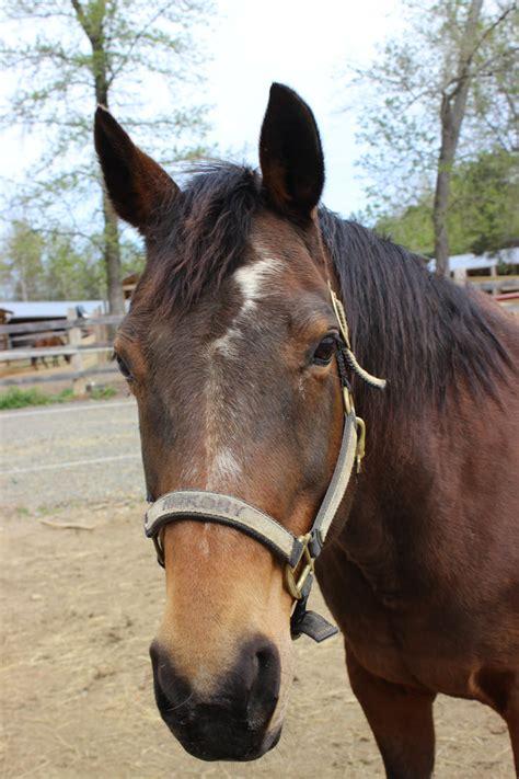 horses meet wings donations deductible tax eagles ranch