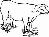 Buffalo Coloring Pages Water Cape African Outline Template Animal Animals Templates Bison Printable Drawing American Sheets Clipart Designlooter Popular 913px sketch template