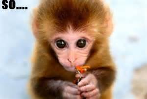 Baby Monkey Quotes Funny
