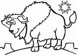 Bison Coloring Pages sketch template