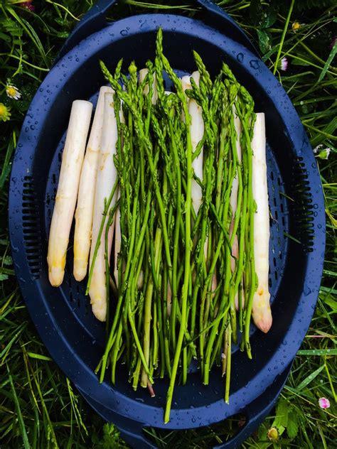 cuisine salade loulougourmet l 39 asperge des bois