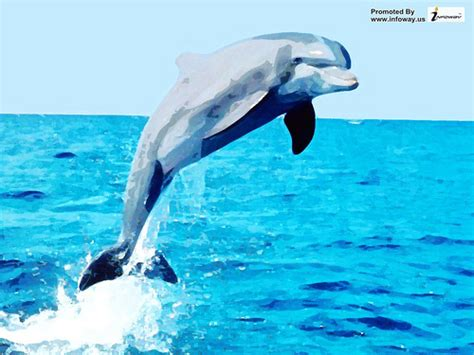 Living 3d Dolphins Animated Wallpaper - free 3d dolphin wallpaper wallpapersafari