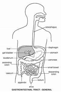 Gastro-Intestinal Tract | Diagram | Patient.co.uk