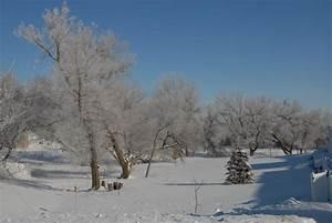 January 9  2010 Winter Scenery
