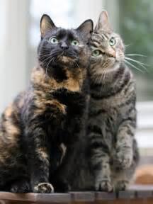 Silver Tabby Cat Tumblr
