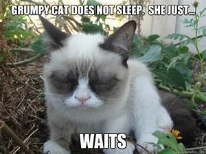 i'm just so tired - Poor Grumpy Cat - quickmeme