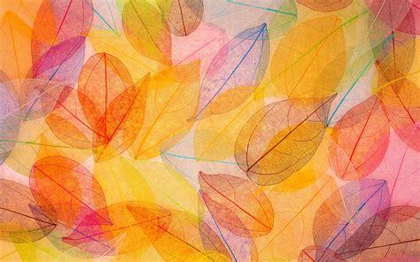 wallpaper autumn leaves hd  nature