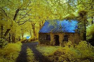 Beautiful, And, Amazing, Forest, Homes, Photography