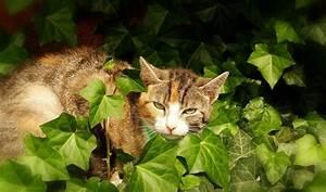 Welche Pflanzen Sind Für Hunde Giftig : welche giftige zimmerpflanzen f r katzen sind gar nicht empfehlenswert ~ Watch28wear.com Haus und Dekorationen