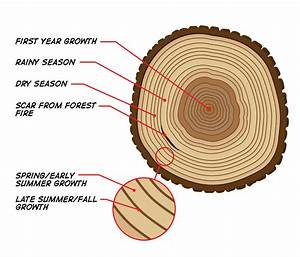 Tree Ring Diagram