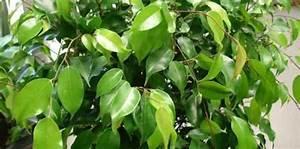 Plante D Intérieur Haute : 9 plantes d 39 int rieur qui nettoient l 39 air et qui sont ~ Premium-room.com Idées de Décoration