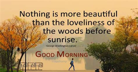 enjoy  beauty  nature early morning quotes