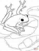 Coloring Pages Frogs Frog Tree American Trending Days Last sketch template