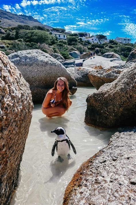 boulders beach guide visiting  penguin beach  cape
