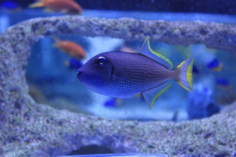 fish marine most popular bought absolutely absolutelyfish