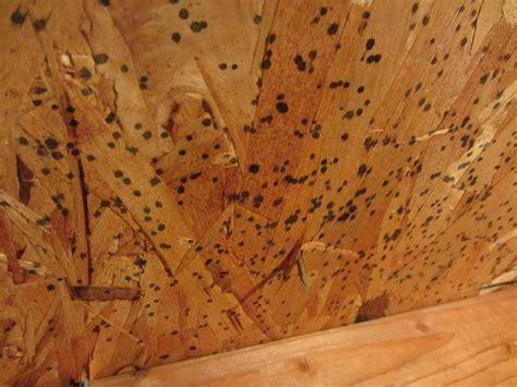mold    stuff   attic home improvement
