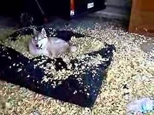husky39s destroy a futon mattress youtube With destruction proof dog bed