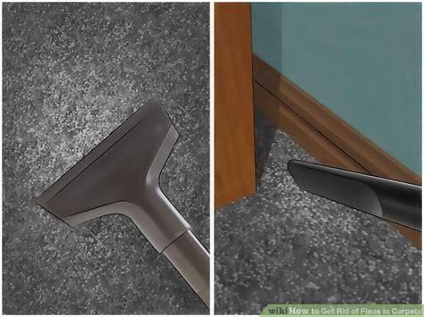 easy ways   rid  fleas  carpets wikihow