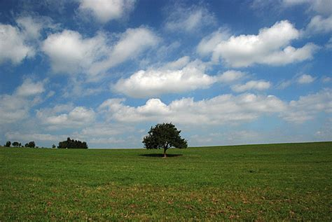 lonely tree   open field photo image