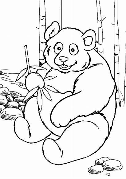 Panda Coloring Pages Bear Printable Colouring Giant