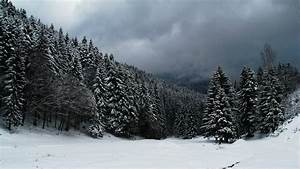 Snow Forest Wallpapers - Wallpaper Cave