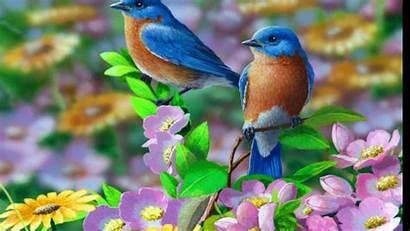 Birds Wire Regina Spektor Knower Witness Same