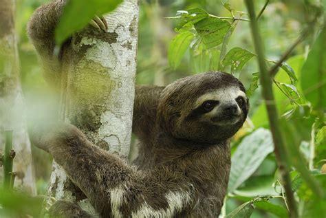 changement de si鑒e social sci une espèce animale sur six menacée par le changement climatique rts ch sciences tech