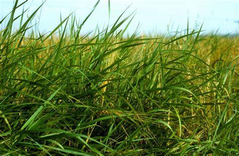 weed control tips  tricks   identify   rid