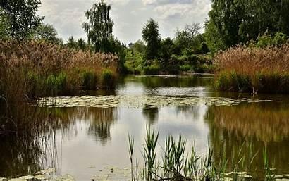 Pond Wallpapersafari