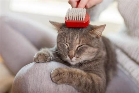 can you use oster dog shampoo on cats