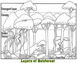 Rainforest Layers  The Rainforest Layers