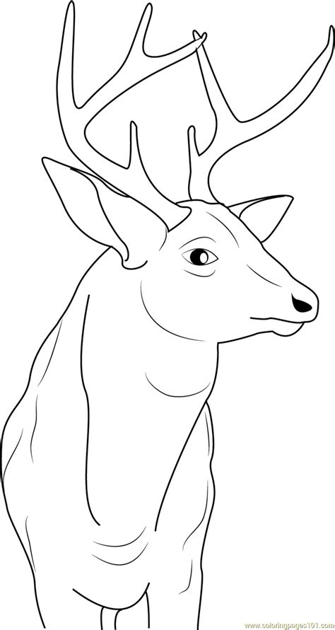 buck deer coloring page  deer coloring pages